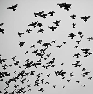 Of Birds Photograph - Flock Of Flying Pigeons by Photography by Ellen L. Soohoo