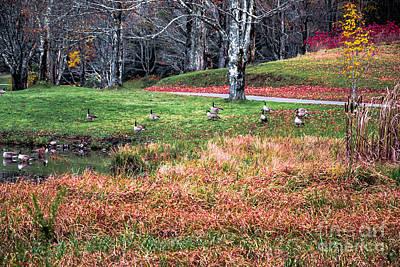 Photograph - Flock Of Geese by Scott Hervieux