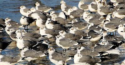 Photograph - Flock Of Gulls by Kirk Stanley