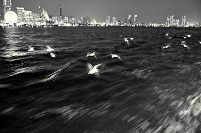 Photograph - Flock Of Seagulls Abstract by Dean Harte