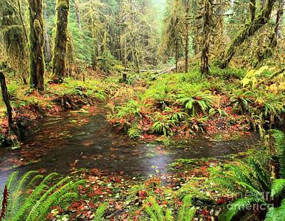 Photograph - Flood In The Forest by Adam Jewell