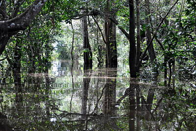 Amazon Rainforest Photograph - Flooded Amazon Rainforest by Oliver J Davis Photography