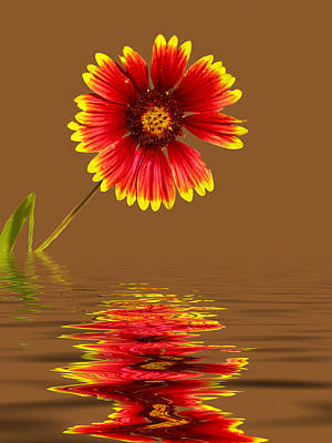 Photograph - Flooded Beach Flower by Bill Barber