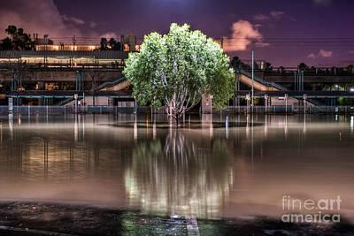 Flooded Tree Art Print