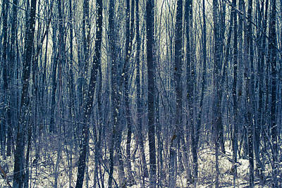 Photograph - Floodplain Forest In Winter by Alexander Kunz