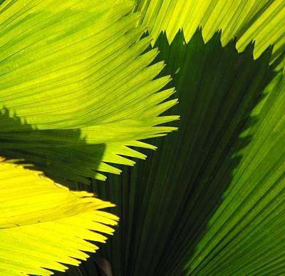 Photograph - Flora - Split End Fan Cactus by William OBrien