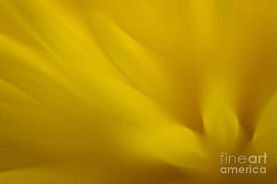 Photograph - Floral Abstract 1 by Idaho Scenic Images Linda Lantzy
