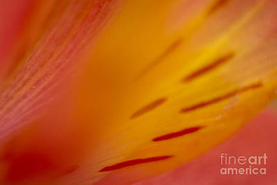 Photograph - Floral Abstract 3 by Idaho Scenic Images Linda Lantzy