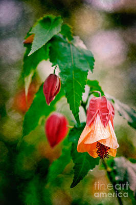 Photograph - Floral Awakening by Bobbi Feasel