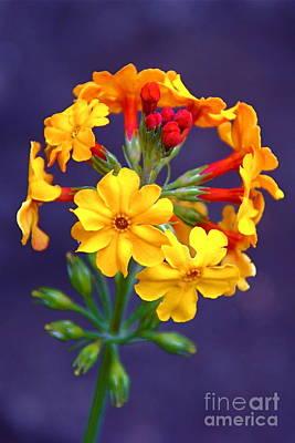 Photograph - Floral Candelabra by Byron Varvarigos