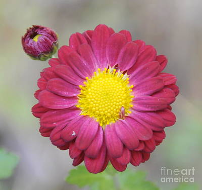 Photograph - Floral by Cindy Lee Longhini