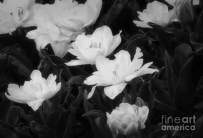 Floral Delicacy Art Print by Fred Lassmann