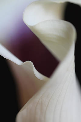 Photograph - Floral Forms Of A Calla Lily by Juergen Roth