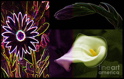 Photograph - Floral Joy by Tom Griffithe