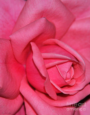 Photograph - Floral Nature Pink Rose Flower Photography by Nature Scapes Fine Art