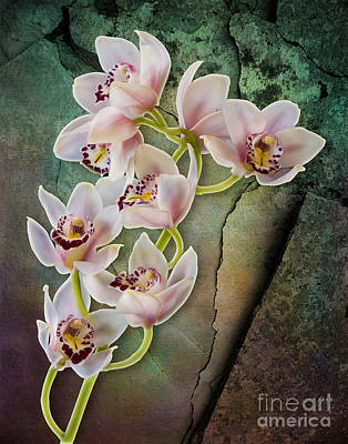 Photograph - Floral Passion by Susan Candelario