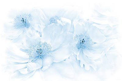 Photograph - Floral Peonies In Blue by Jennie Marie Schell