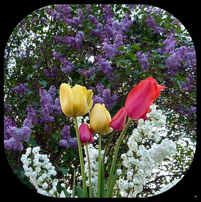 Royalty-Free and Rights-Managed Images - Floral Profusion by Will Borden