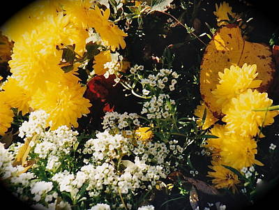 Photograph - Floral Vignette by Barbara Plattenburg