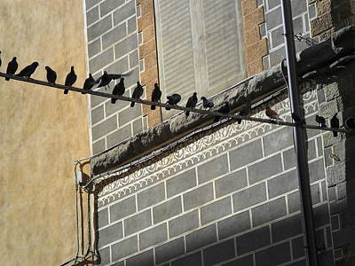 Photograph - Florentine Pigeons by Laurel Best