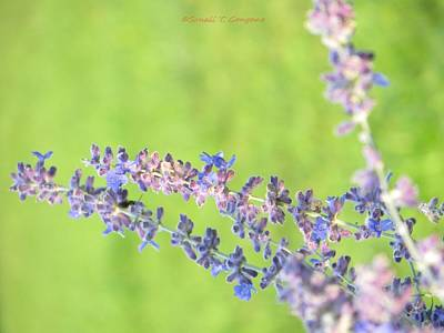 Hues Of Purple Photograph - Florets by Sonali Gangane