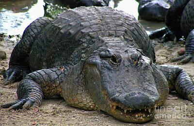 Photograph - Florida Croc  by Alexandra Jordankova