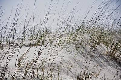 Photograph - Florida Dunes by Helen Haw