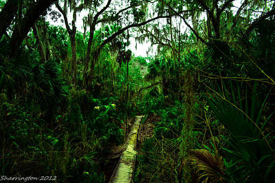 Photograph - Florida Jungle by Shannon Harrington