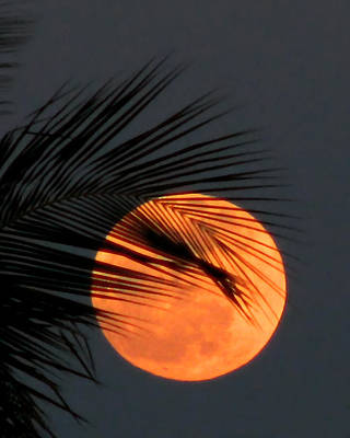 Florida Moonrise Art Print