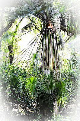 Photograph - Florida Palms by Carolyn Marshall