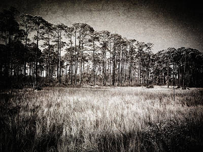 Sign In Florida Photograph - Florida Pine 2 by Skip Nall
