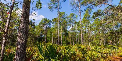 Florida Scrub 7 Print by Carson Wilcox