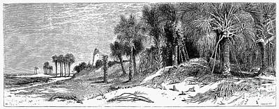 Florida: St. Johns River Art Print by Granger