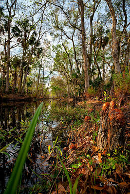 Florida Stream Art Print by Christopher Holmes
