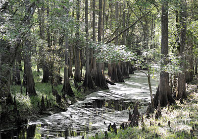Photograph - Florida Wilderness In Spring 2. by Nancy Greenland