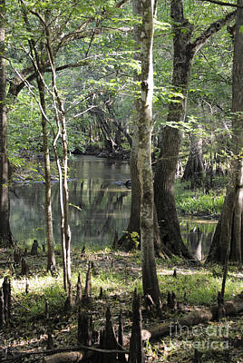 Photograph - Florida Wilderness In Spring. by Nancy Greenland
