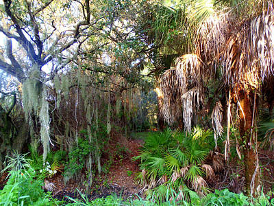 Photograph - Florida Woods by Lou Ann Bagnall