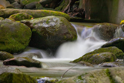 Art Print featuring the photograph Flow by Cindy Haggerty