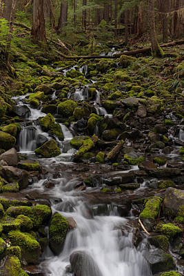Olympic National Park Photograph - Flow Of Life by Mike Reid