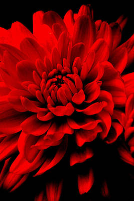 Photograph - Flower 1  by Jeff Heimlich