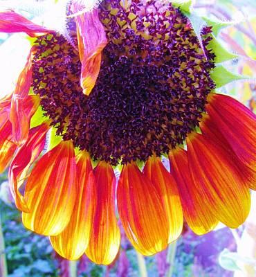Photograph - Flower-18 by Todd Sherlock
