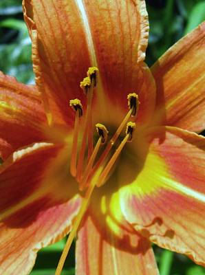 Photograph - Flower-22 by Todd Sherlock
