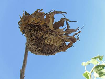 Photograph - Flower 39 by Todd Sherlock