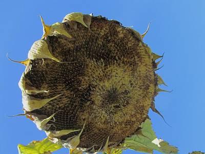Photograph - Flower 41 by Todd Sherlock