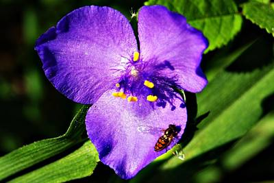 Photograph - Flower And Bee by Joe Faherty