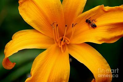 Photograph - Flower And Bee by Ronald Grogan