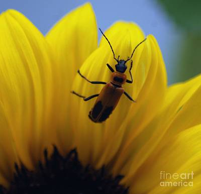 Photograph - Flower And Bug by Ronald Grogan