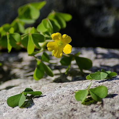 Photograph - Flower And Dancing Clover by LeeAnn McLaneGoetz McLaneGoetzStudioLLCcom