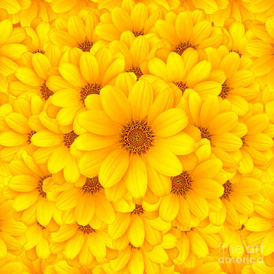 Flower Gardens Photograph - Flower Background by Carlos Caetano
