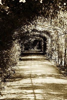 Trees Photograph - Flower Canopy by Maj Seda